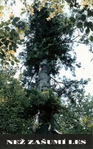 Přebal pořadu: Než zašumí les